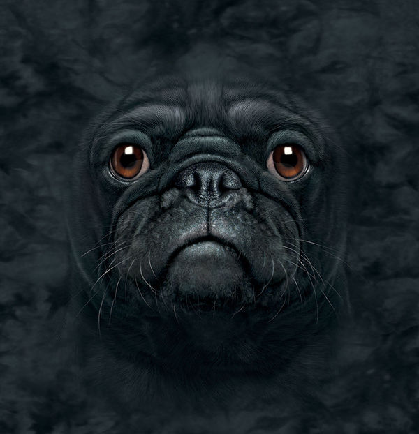 Black Pug By The Mountain