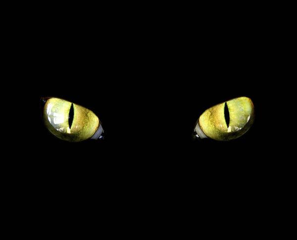 Cat Eyes   DecalGirl
