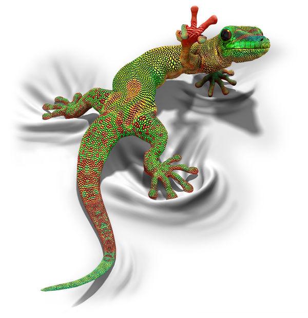 gecko by david penfound