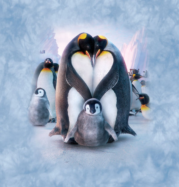 penguin heart by david penfound