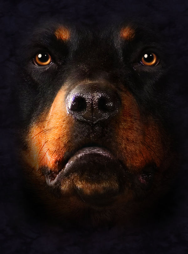 Rottweiler By The Mountain Decalgirl