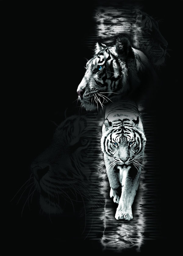 White Tiger By Michael Mcgloin Decalgirl
