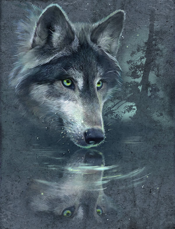 Wolf Reflection By Antonia Neshev