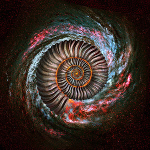 Ammonite Galaxy