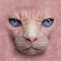 Hairless Cat