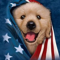 Patriotic Retriever