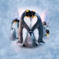 Penguin Heart