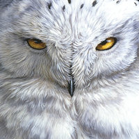 Pandigital Planet 7in Tablet Skin - Snowy Owl